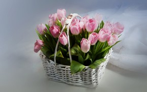 Picture flowers, basket, ring, petals, tulips