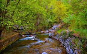 Picture Stream, Trees, Forest, River, River, Forest, Trees, Flow
