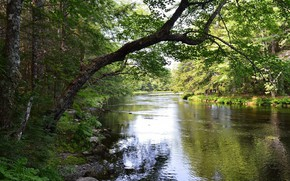 Picture greens, landscape, nature, river, beauty, spring
