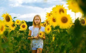 Picture field, summer, sunflowers, flowers, girl