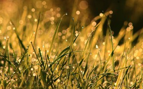 Picture grass, drops, macro, light, nature, Rosa, glare, background, after the rain, bokeh
