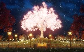 Picture Park, the evening, Sakura, in bloom
