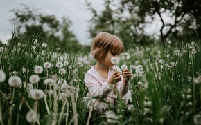 Picture summer, grass, look, flowers, branches, Park, mood, glade, child, spring, garden, meadow, girl, dandelions, sitting, …