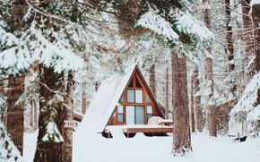 Picture Snow, Snow, Winter Forest, Winter Forest, Wooden House, Деревянный Домик