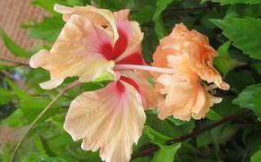 Picture blossom, petals, Bloom, pistils