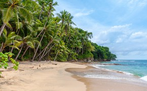 Picture sand, beach, the sky, clouds, trees, nature, palm trees, the ocean, Panama, Playa Blanca