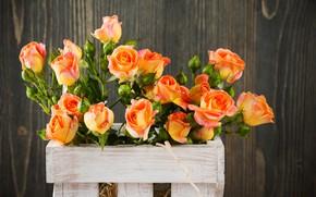 Picture roses, bouquet, box, orange