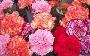 Picture flowers, bouquet, clove, Meduzanol ©