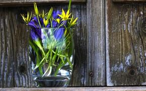 Picture glass, flowers, Board, bouquet, yellow, purple, vase, blue