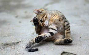 Picture road, cat, look, asphalt, pose, kitty, grey, street, the game, paws, tail, kitty, sitting, striped