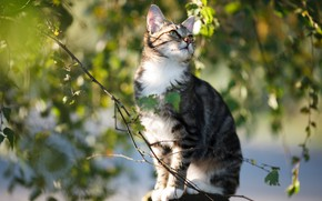 Picture cat, cat, leaves, branches, kitty, sitting