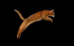 Picture Cat, Jump, Black Background