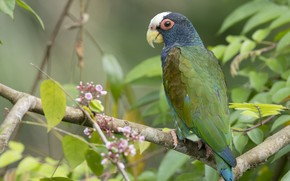 Picture bird, feathers, parrot