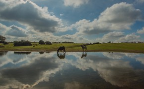 Picture field, the sky, clouds, lake, reflection, shore, horses, horse, meadow, space, pair, drink, two, pond, …