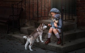 Picture flowers, mood, dog, girl, puppy, stage, husky, a bunch