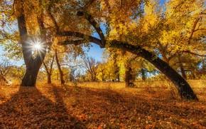 Picture autumn, the sun, trees, foliage, Sahaidak Paul