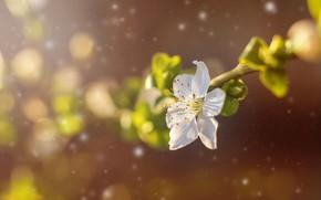 Picture flower, spring, petals, garden