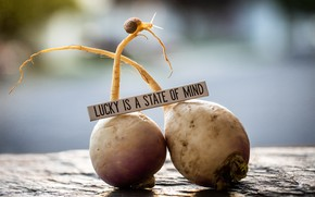 Picture turnips, lucky is a state of mind, snail and food