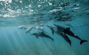 Picture sea, wave, water, pack, dolphins, underwater world, under water, a lot, swimming