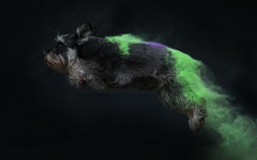 Picture jump, color, dog, dust