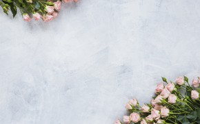 Picture roses, pink, decor, bouquets