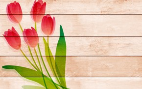 Picture flowers, Board, tulips, postcard, template, blank