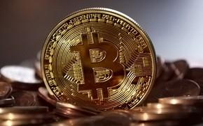 Picture blur, logo, logo, coins, coins, bitcoin, bitcoin