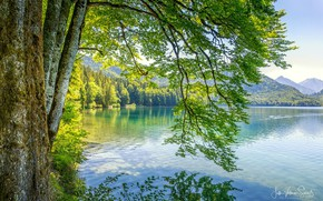 Picture forest, the sun, mountains, nature, lake, Jutta Voetmann-Schlub
