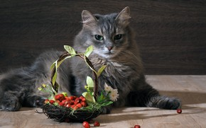 Picture cat, cat, berries, grey, strawberries