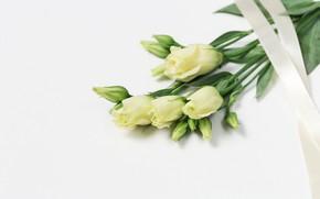 Picture bouquet, tape, eustoma, eustoma