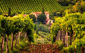 Picture house, Italy, vineyard, Tuscany