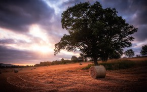 Picture nature, tree, hay