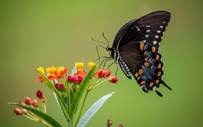 Picture macro, flowers, background, butterfly