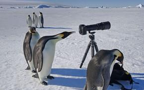 Picture camera, Antarctica, curiosity, Emperor penguin