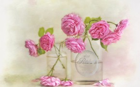 Picture glass, flowers, background, roses, bouquet, art, jars, pink, painting, roses, bottle