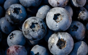 Picture berries, food, large, blueberries