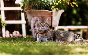 Picture cat, grass, cat, look, flowers, pose, the dark background, lawn, garden, lies, truck, flowerbed, striped