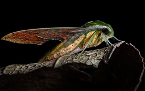 Picture macro, butterfly, leaf, wings, profile, insect, black background, abdomen, hairy