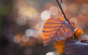 Picture autumn, light, branch, bokeh, autumn leaves