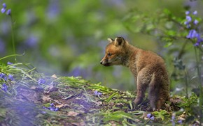 Picture flowers, leaves, background, nature, profile, Fox, bokeh, hill, Fox, branches, Fox