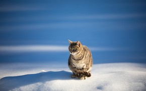 Picture winter, cat, nature