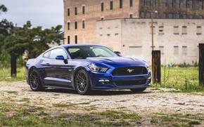 Picture Mustang, Ford, Ford Mustang, Ford Mustang, Muscle Car