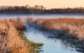 Picture field, nature, fog