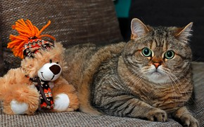 Picture cat, cat, look, face, pose, grey, background, sofa, toy, portrait, paws, lies, bear, striped, Teddy, …
