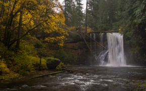 Picture autumn, forest, river, waterfall, Oregon, Oregon, Silver Falls State Park, Upper North Falls, Silver Creek