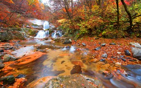 Picture river, forest, waterfall, leaves, autumn, waterfall, summer, forest, rocks, beautiful, river, landscape, landscape