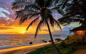 Picture summer, sunset, holiday, hawaii, palm tree