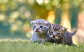 Picture kittens, kids, a couple, bokeh