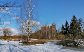 Picture ice, nature, tree, river, весна 2021