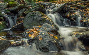 Picture forest, stream, stones, moss